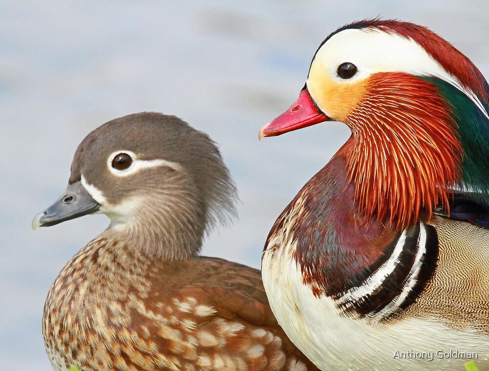 A pretty couple! by jozi1