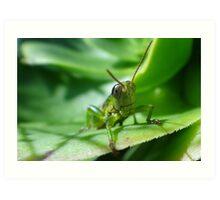 Gaudy grasshopper Art Print