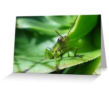 Gaudy grasshopper Greeting Card
