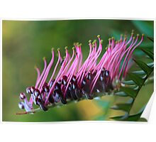 The Ant & the Grevillea Poster