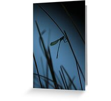 Dragonfly Silhoutte Greeting Card