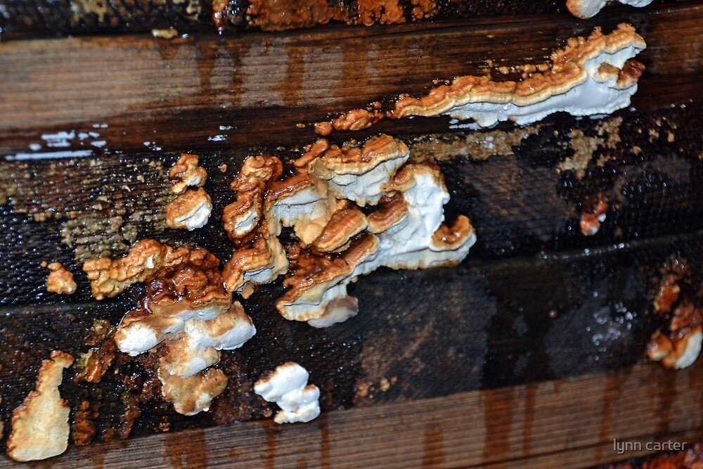 Fungi In The Termite House by lynn carter
