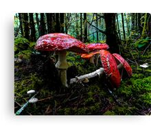 I Fell For You ~ Amanita muscaria ~ Canvas Print