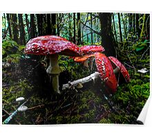 I Fell For You ~ Amanita muscaria ~ Poster