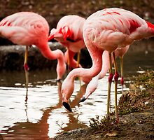 Flamingo Flock Eating by PatiDesigns