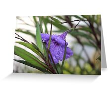 Watered Purple Flower Greeting Card