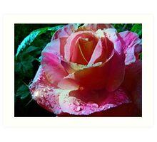 Midnight Rose Art Print