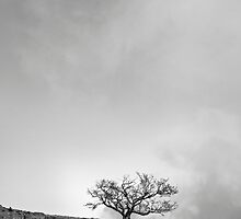The Desolate Tree by Alex Wagner
