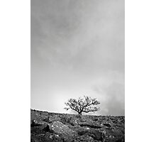 The Desolate Tree Photographic Print
