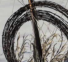 Barbed Wire, Grass, and Snow by Deb Fedeler