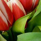 Tempting Tulips by WildestArt