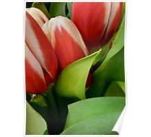 Tempting Tulips Poster