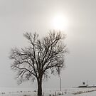 Tree In Winter by Deb Fedeler