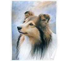 Dog 122 Sheltie Collie Poster
