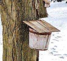 Sap Bucket by Mary Carol Story