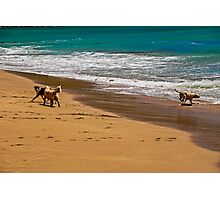 Friends At The Beach Photographic Print