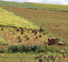 farming by Anne Scantlebury