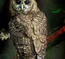 THE NORTHERN SPOTTED OWL by Daniel-Hagerman