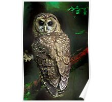 THE NORTHERN SPOTTED OWL Poster