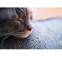 let sleeping cats lie Photographic Print