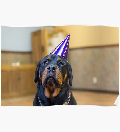 Happy Birthday from a Rottweiler Poster