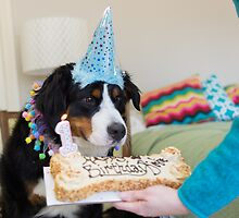 Bernese and the Birthday fun! by TheJill