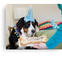 Bernese and the Birthday fun! Canvas Print