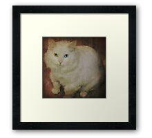 The vintage kitty Framed Print