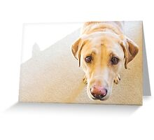 the eyes of a sweet labrador. Greeting Card
