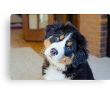 Bernese says what??? Canvas Print