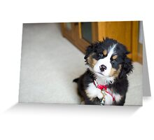 Do you have a treat for me? Greeting Card