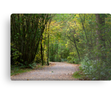 Trail throught the Forest Metal Print