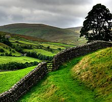 Swaledale by Stephen Smith