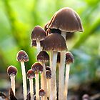 Group of Mycena Mushrooms by Michael Russell