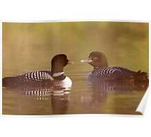 """""""Ahh…a-loon at last"""" - Common Loon Poster"""