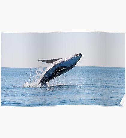 whale breach Poster