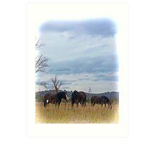 Shire Horses Art Print