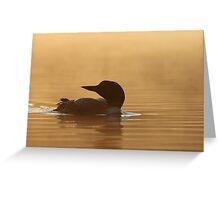 Common loon in morning light Greeting Card