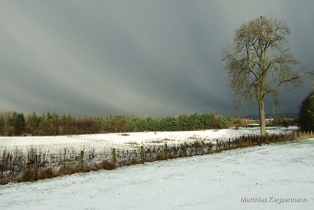 Winter scene with tree by Matthias Keysermann