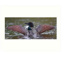 Loon Stretch - Common Loon Art Print