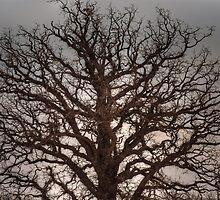 Myrielle's Tree © by © Hany G. Jadaa © Prince John Photography