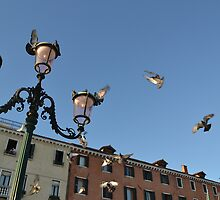 Pigeons Around Lamp Post by Alex Wagner