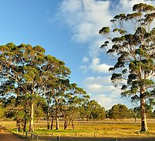 Gumtrees on Farmland by metriognome