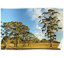 Gumtrees on Farmland Poster