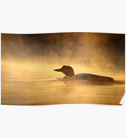 Into the Mist - Common Loon Poster