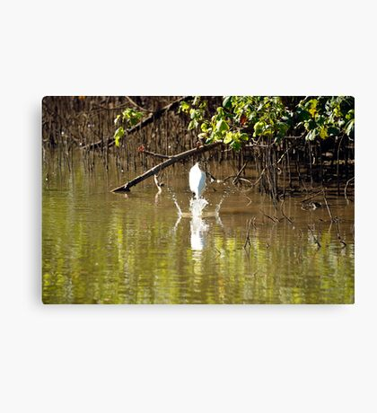 Great White Egret Fishing  Canvas Print