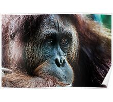 Primate thoughts Poster