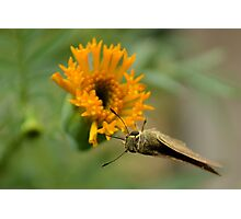 A Moth on Flower Photographic Print