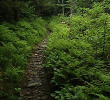 Appalachian Trail by lkbphotography