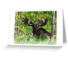 Bullwinkle Greeting Card